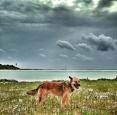 coyote sian kan