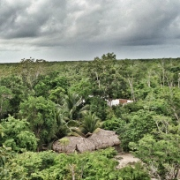 vida en la selva
