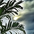 mirando al sol