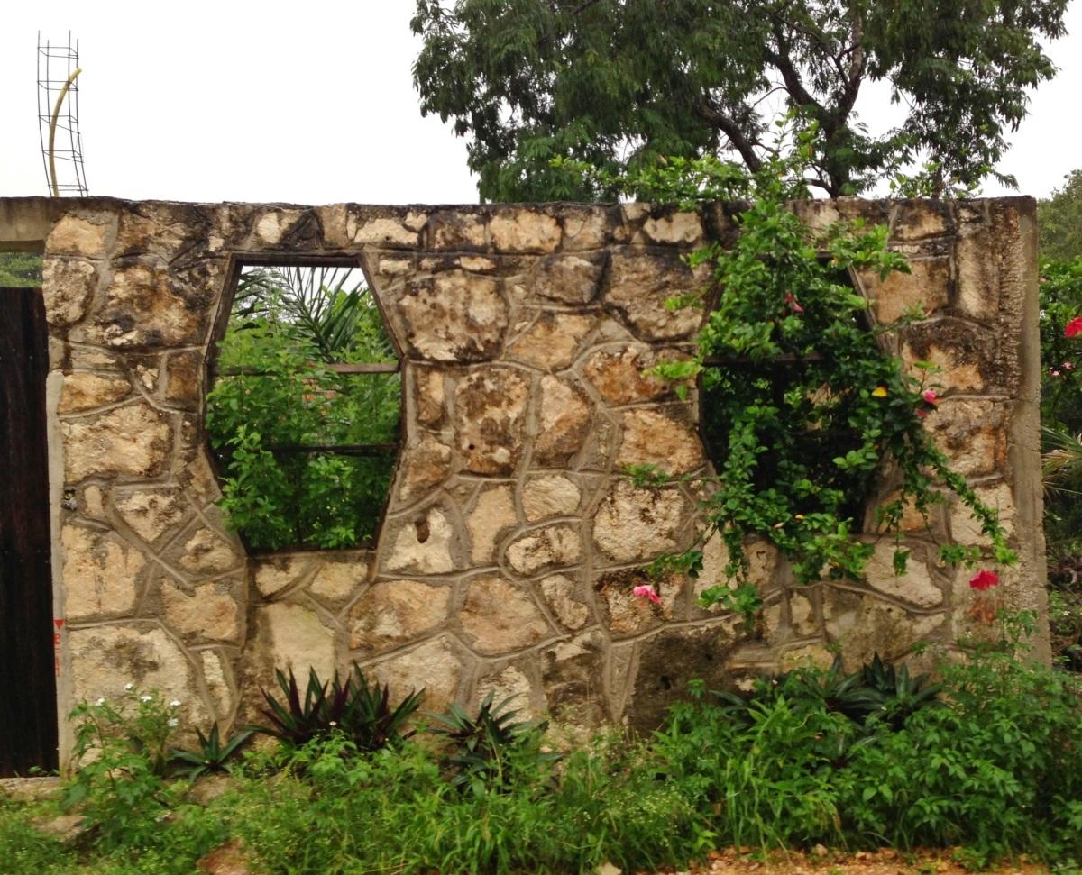 Muro con plantas pablotulum for Muros de jardin