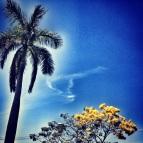 Imponente palmera