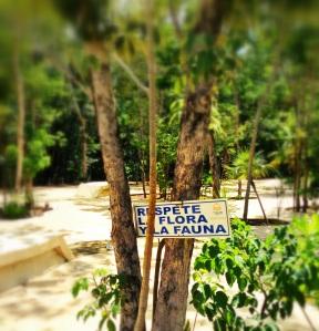 cartel en aldea zama. cuidemos la flora y la fanuna.