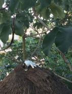 gato-palapa